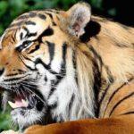 マネーの虎に学べ!就活の面接に役立つプレゼンと経営者の考え方を学ぶ
