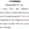 【中学速単解説】⑮ハミングバード(3)解読のポイント